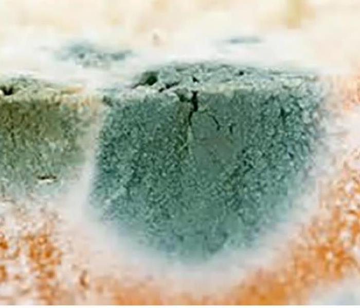 Mold Remediation How Does Mold Get In The House?